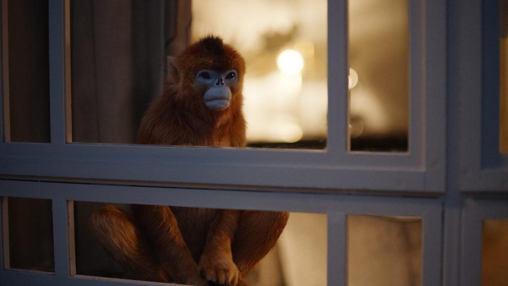 Den gylne og fryktede apen er Mrs. Coulters daimon, men vi får aldri vite hva han heter. Foto: HBO